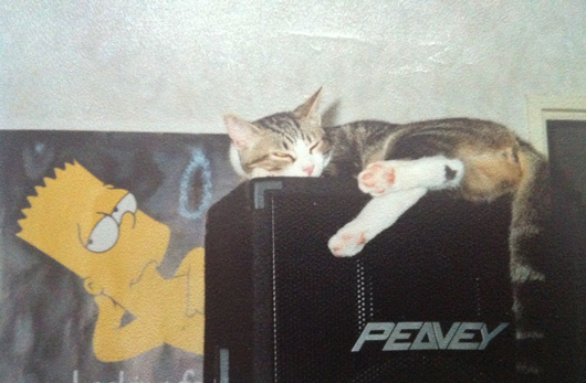 chat-dort-enceinte