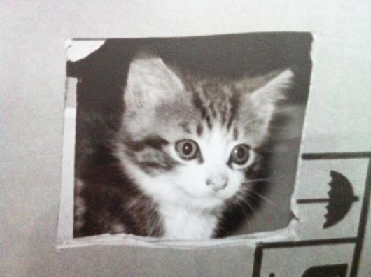 chaton-carton-noir-blanc