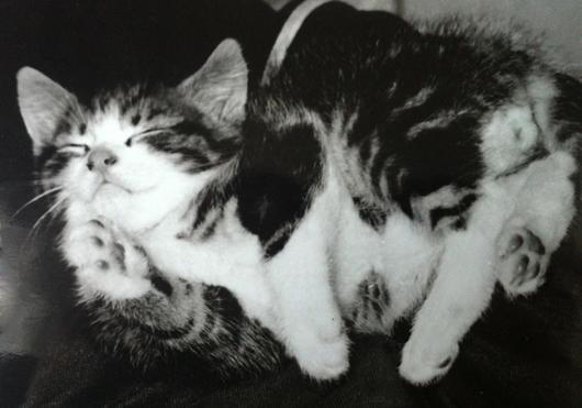 chaton-dort-noir-blanc