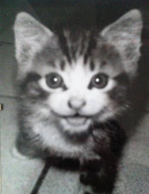 chaton-sourit