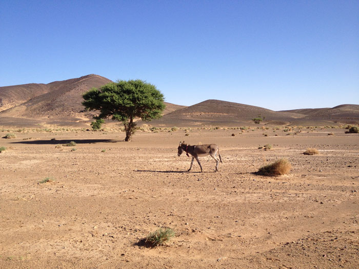ane-desert-maroc