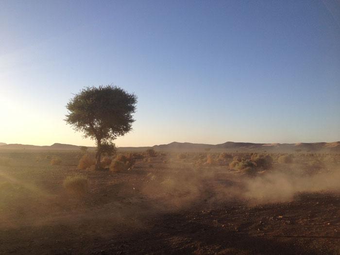 poussiere-arbre-desert-maroc