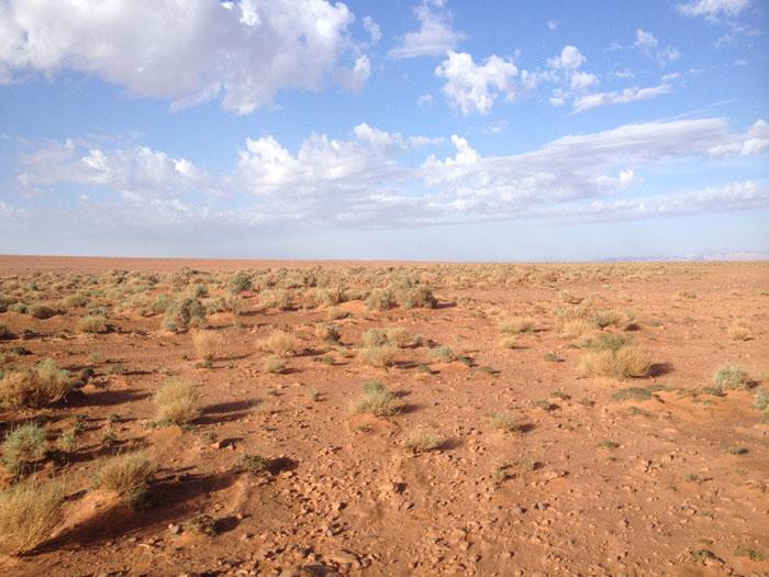 vegetations-desert-afrique