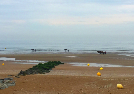 cabourg-chevaux-thalasso
