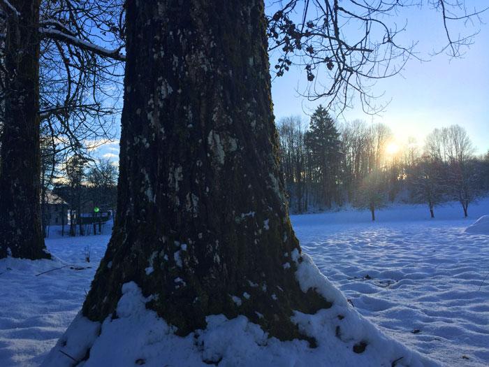 arbre-montagne-neige