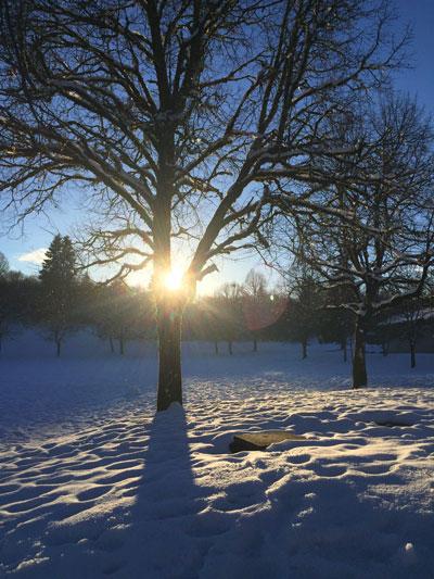 arbre-neige-soleil