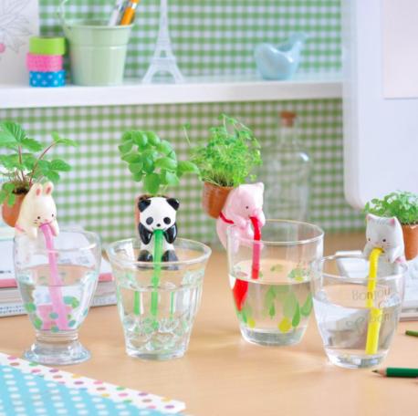 mini-plante-panda-basilic